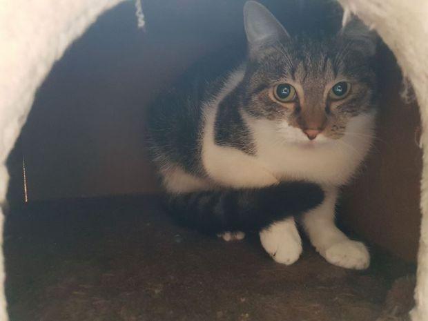 Ter adoptie: Precious