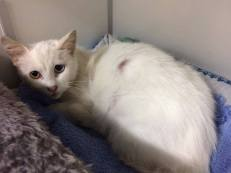 Ter adoptie: Umaya