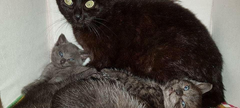 Ter adoptie: Anna