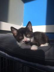 Ter adoptie: Lumina
