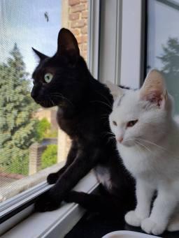 Samen ter adoptie: Lys (zwart) en Mousti (wit)