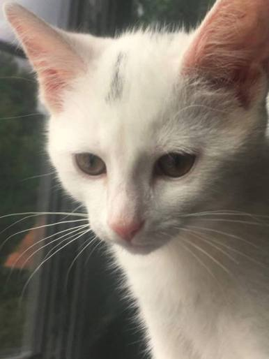 Ter adoptie: Mousti