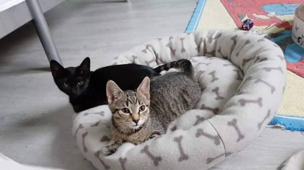 Samen ter adoptie: Pan (zwart) en Pepijn