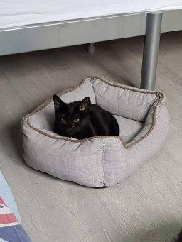Ter adoptie: Pan