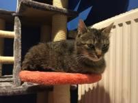 Ter adoptie: Iris