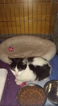 Ter adoptie: Khaleen