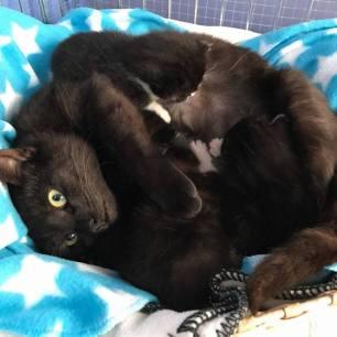 Ter adoptie: Lys