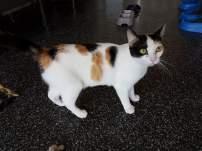 Ter adoptie: Shania