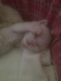Kleintje Udolf is nog niet ter adoptie.