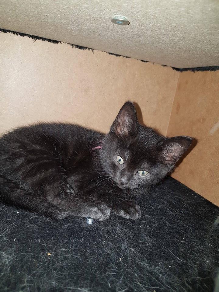 Ter adoptie: Amadeus