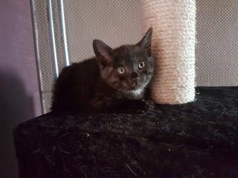 Ter adoptie: Arianna