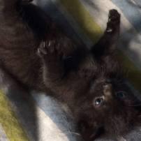 Ter adoptie: Ella