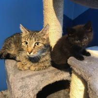 Ter adoptie: Ella (rechts) met mama Iris