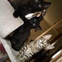 Ter adoptie: Lyo (in het midden)