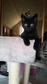 Ter adoptie: Lona