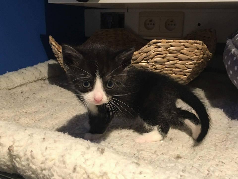 Ter adoptie: Lux