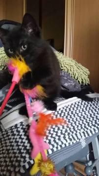 Ter adoptie: Lyo