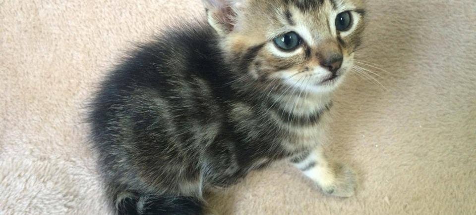 Ter adoptie: Nofi