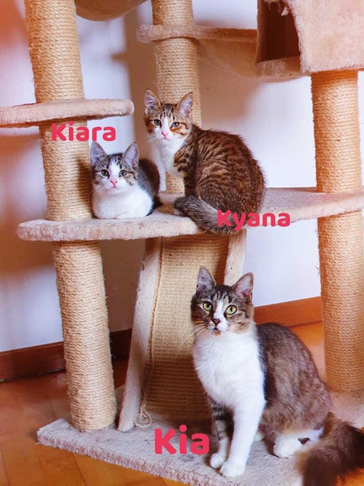 Kyana-Kiara-Kia.jpg