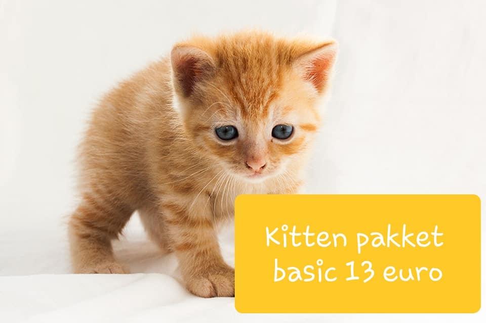 Kitten basic.jpg