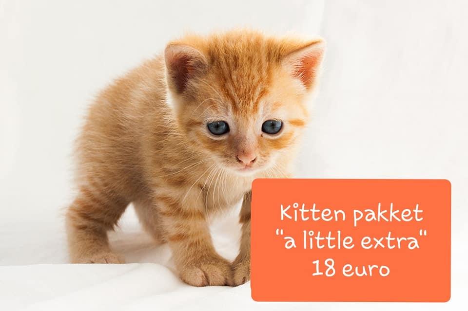 Kitten-extra.jpg
