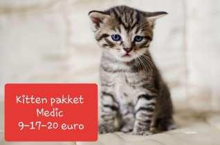Kitten-Medic.jpg