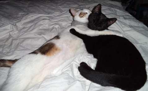 Barra en Frankie ter adoptie