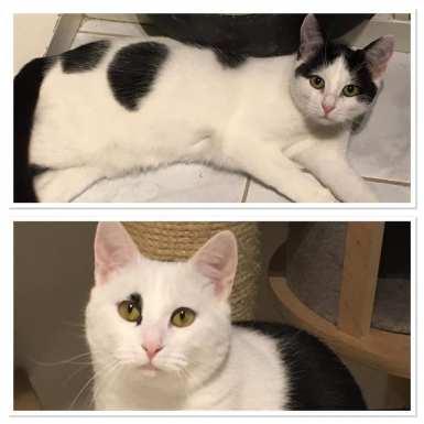 Ter adoptie: Lola en Lolita