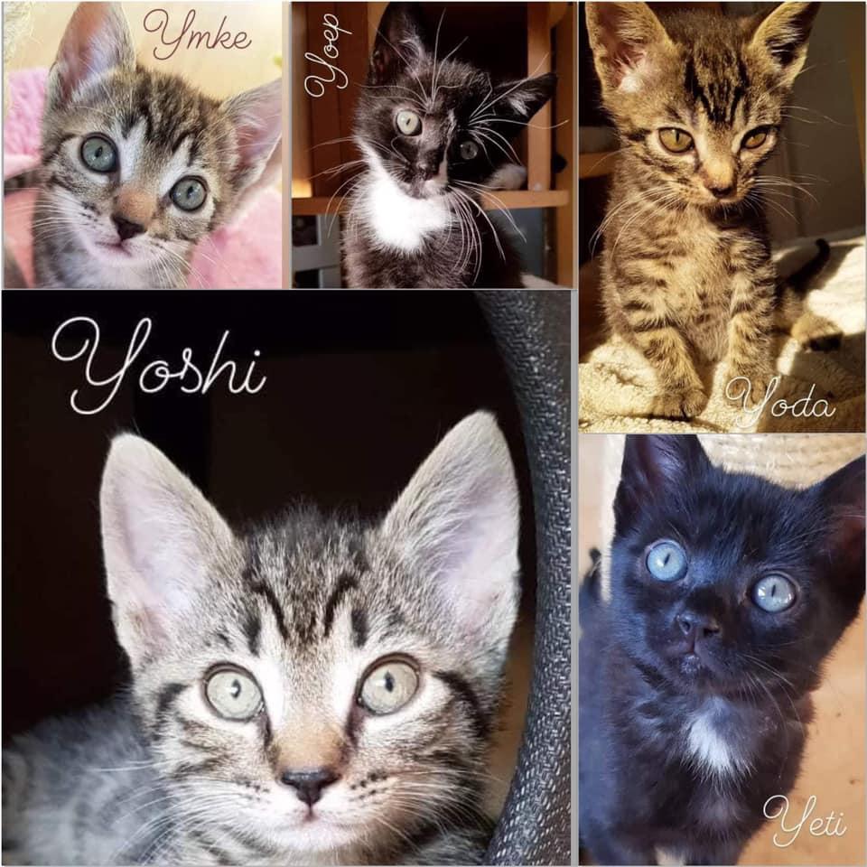 Ymke, Yoep, Yoda, Yoshi en Yeti